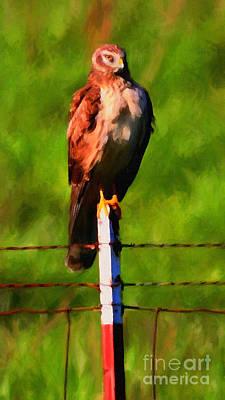 Hawk Digital Art - Marsh Hawk . Bird Of Prey . Painterly by Wingsdomain Art and Photography