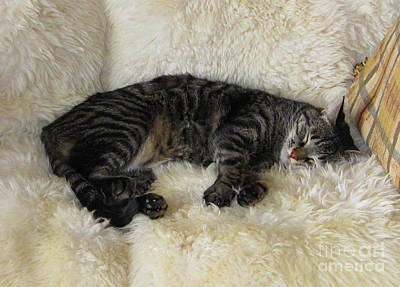 Photograph - Martius The Black And White Tabby by Donna L Munro