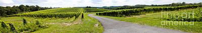 Maryland Vineyard Panorama Art Print by Thomas Marchessault