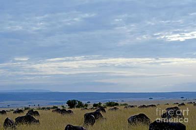 Masai Mara Art Print by Pravine Chester