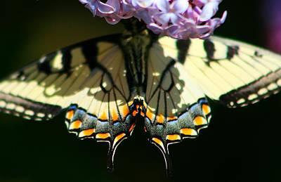 Masked Monarch Art Print