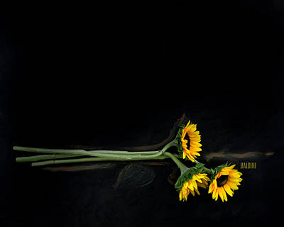 Photograph - Master Sunflowers by J R Baldini M Photog