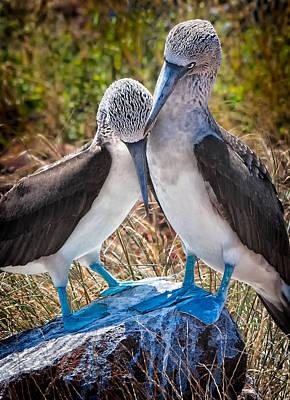 Galapagos Islands Photograph - Mates For Life by Ecuador Images