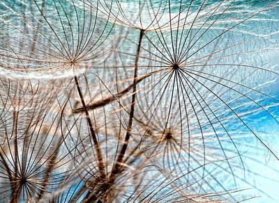 Salsify Wall Art - Photograph - Matrix by Steve Harrington