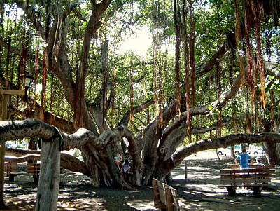 Art Print featuring the photograph Maui Banyan Tree Park by Rob Green