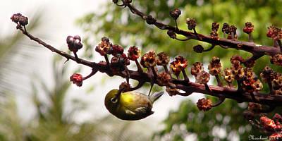 Photograph - Maui Bird by Marilyn Marchant