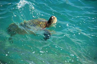 Photograph - Maui Sea Turtle by Lynn Bauer