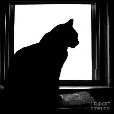 Max In Silhouette Art Print by Dale   Ford