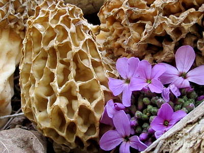 May Is For Morels Art Print by Timothy Myles