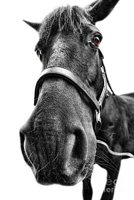 Photograph - Me So Horsey by Yhun Suarez