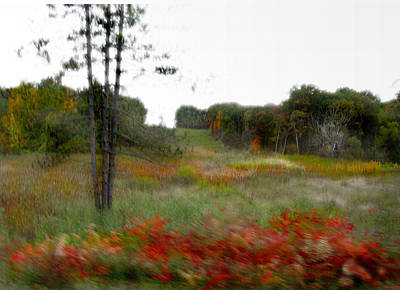 Photograph - Meadow by Marilyn Marchant
