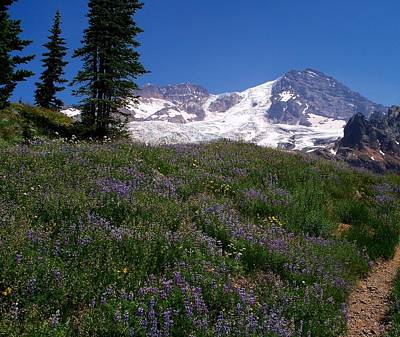 Photograph - Meadow Mountain by Mark Bowmer