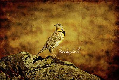 Meadowlark Wall Art - Photograph - Meadowlark by Lana Trussell