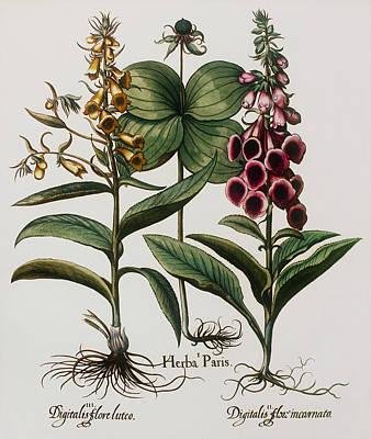 Medicinal Plants Art Print by Georgette Douwma