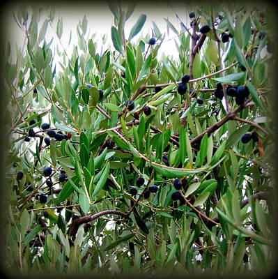 Photograph - Mediterranean Olives by Carla Parris