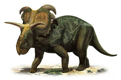 Medusaceratops Lokii, A Prehistoric Era Art Print by Sergey Krasovskiy