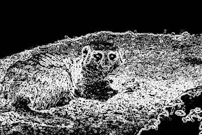 Photograph - Meerkat Neon Bw by Elizabeth  Doran