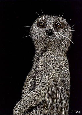 Etching Mixed Media - Meerkat On Watch by Linda Hiller