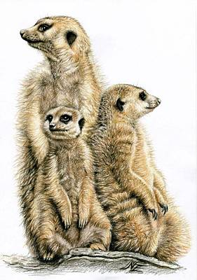 Meerkat Drawing - Meerkats by Nicole Zeug