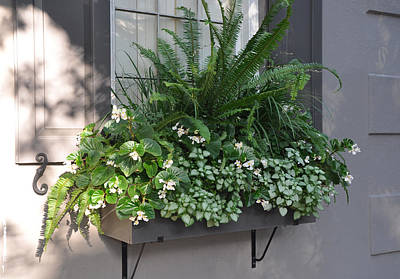 Photograph - Meeting Street Window Box by Lori Kesten