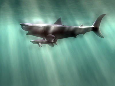 Megalodon Shark And Great White Art Print by Christian Darkin