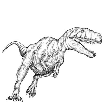T Rex Drawing - Megalosaurus by Karl Addison