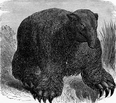 Megatherium, 19th Century Artwork Art Print by