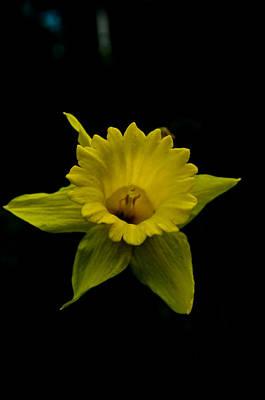 Island Digital Art - Mellow Yellow by Travis Crockart