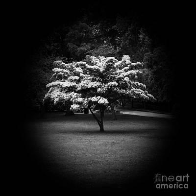 Locket Photograph - Memoir 2 by Luke Moore
