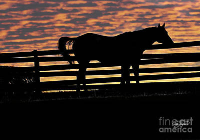 Memorial Day Weekend Sunset In Georgia - Horse - Artist Cris Hayes Print by Cris Hayes
