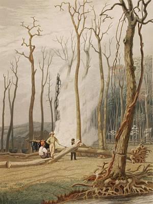 Men Cutting And Burning Girdled Tree Art Print by Everett