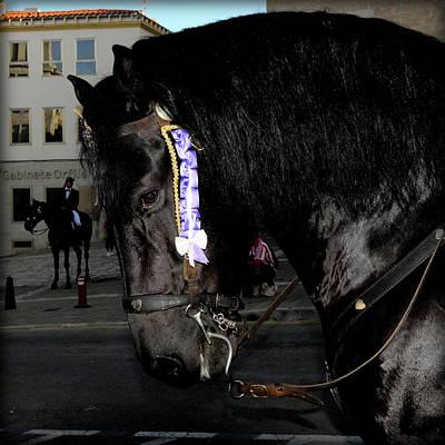 Art Print featuring the photograph Menorca Horse 2 by Pedro Cardona