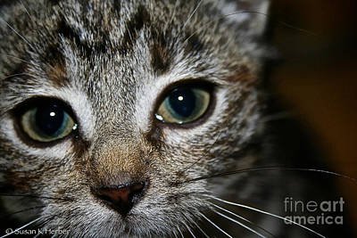 Photograph - Meow  by Susan Herber