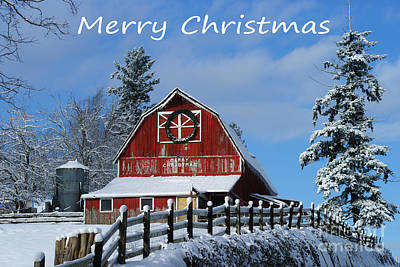 Bath Time Rights Managed Images - Merry Christmas Card Royalty-Free Image by Randy Harris