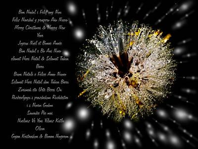 Merry Xmas - Merry Christhmas - Greeting Card With An Iced Dandelion Art Print by Pedro Cardona