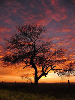 Mesquite Tree Photograph - Mesquite On Fire by Matias Alvarado