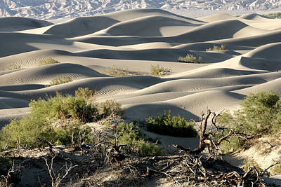 Photograph - Mesquite Sand Dunes by Wes and Dotty Weber