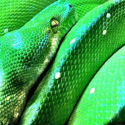Reptiles Wall Art - Photograph - Met This Guy At Queensland Museum by Brett Starr