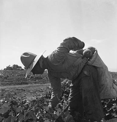 Cantaloupe Photograph - Mexican-american Farm Laborer Bent by Everett