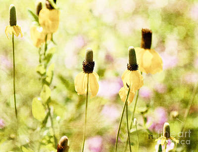 Photograph - Mexican Hat In Yellow by Pam  Holdsworth