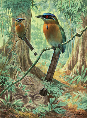 Mexican Motmots Are Perched On Jungle Art Print by Walter A. Weber