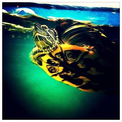 Reptiles Photograph - Mexican Turtle by Natasha Marco