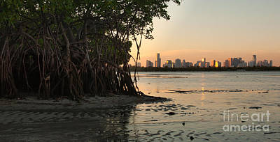Miami Skyline Photograph - Miami With Mangroves by Matt Tilghman
