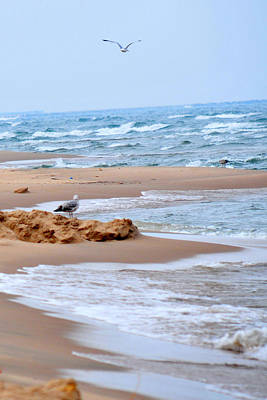 Michigan Seashore Art Print by Tina Karle