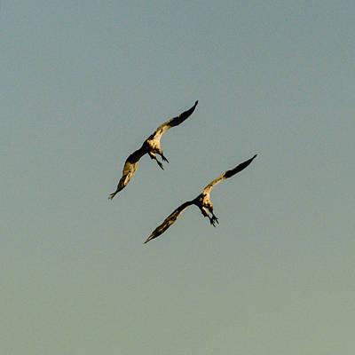 Photograph - Midair Landing by Alistair Lyne