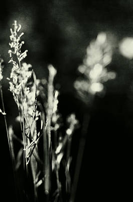 Photograph - Midnight In The Meadow by Rebecca Sherman