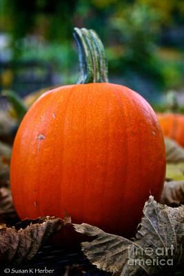Photograph - Midwest Pumpkin by Susan Herber