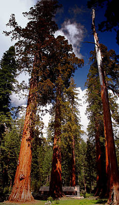 Photograph - Mighty Redwoods by Ellen Heaverlo