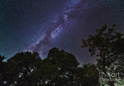 Mesquite Tree Photograph - Milky Way Above Live Oak And Mesquite by John Davis