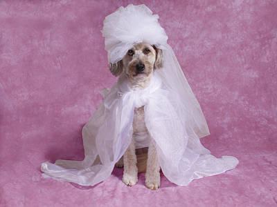 Millie The Bride Original